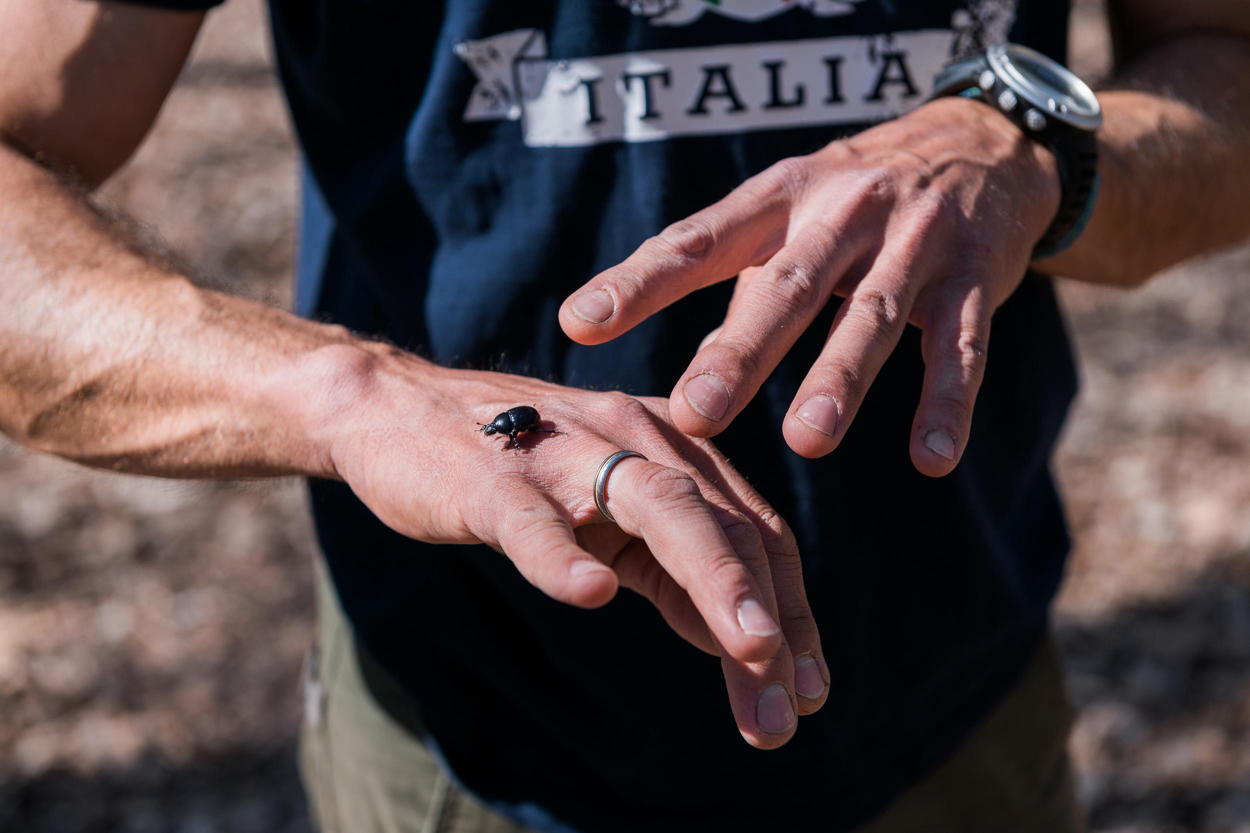 Reportage photo Vallée de Chevreuse scarabée