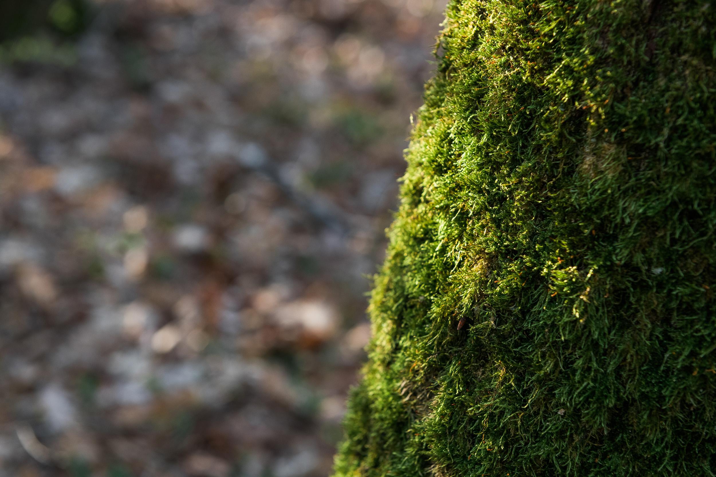 Reportage photo Vallée de Chevreuse découverte nature Cravate et Sandalettes