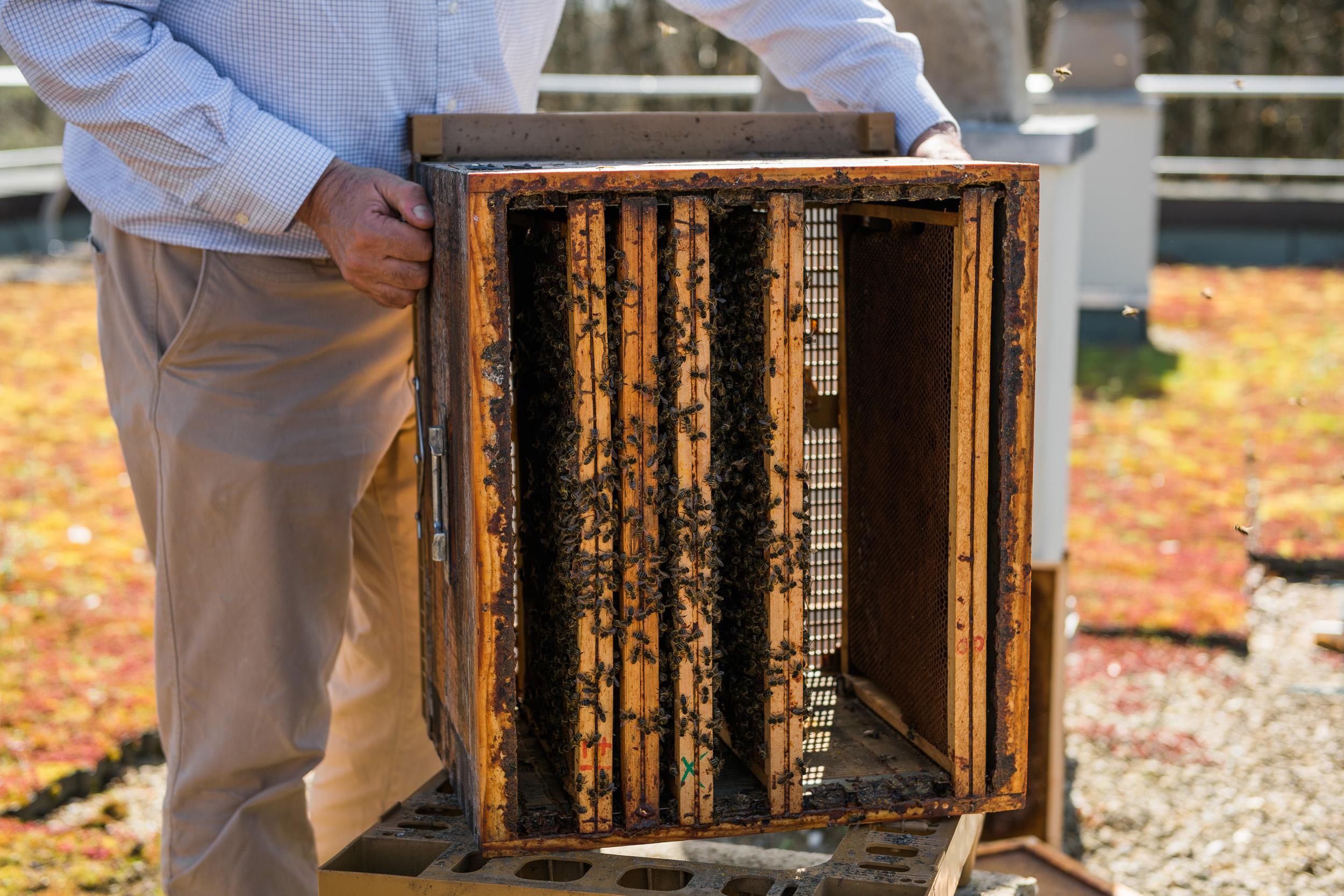 Reportage photo Vallée de Chevreuse abeille apiculteur Cravate et Sandalettes